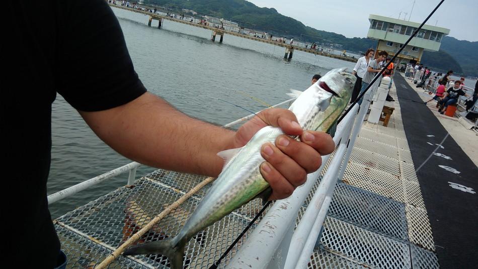 福岡 サゴシ釣り 秋 西区 糸島