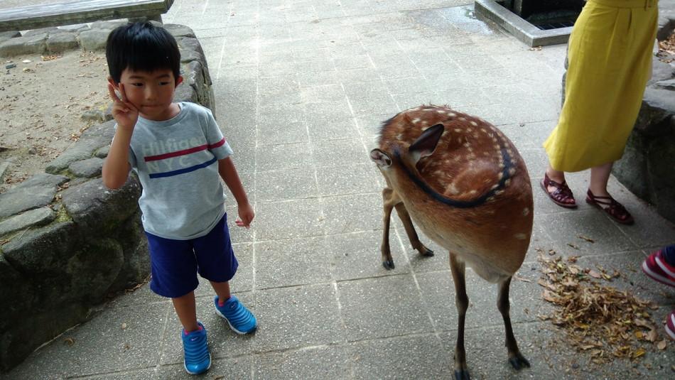 家族 広島 宮島 厳島神社 鹿 子育てブログ 観光