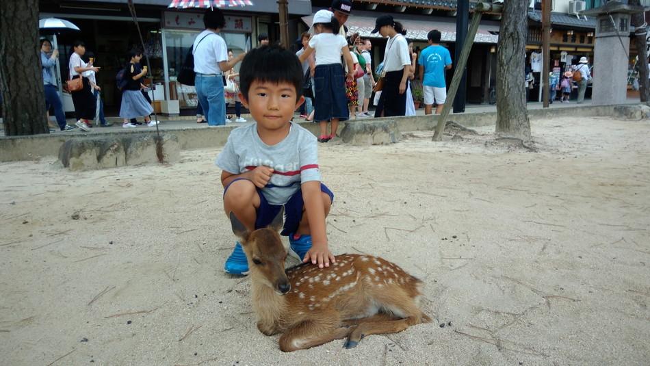 宮島観光 鹿 子供 人気 ブログ