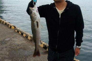 博多湾 シーバス 65センチ 釣り