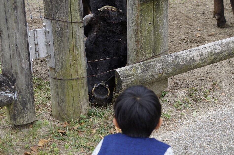 子供と牛 動物園 福岡
