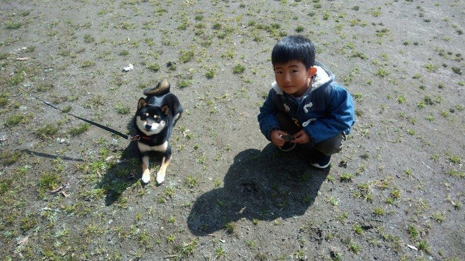 おすすめキャンプ場であったかわいい黒豆柴犬
