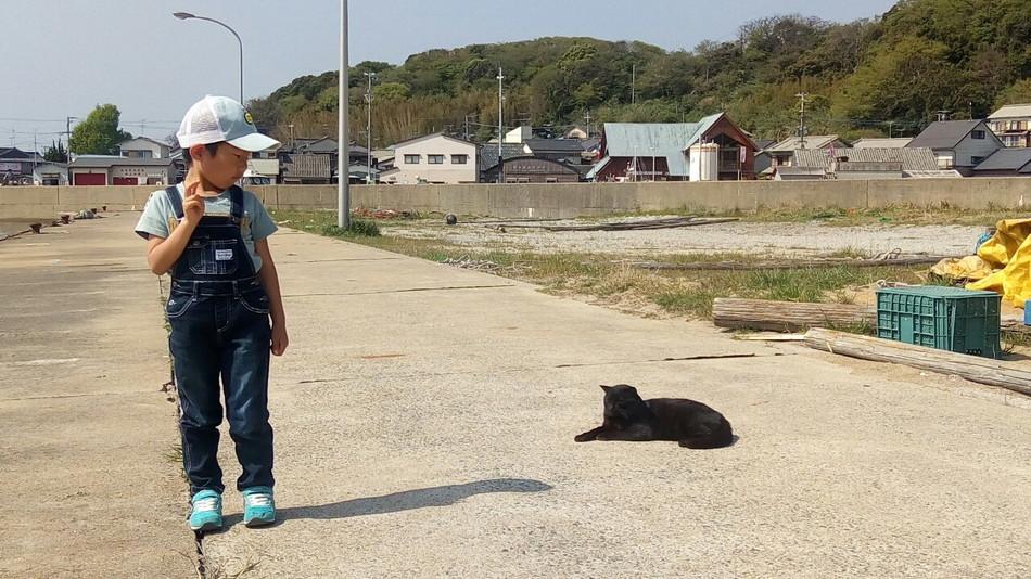 相島 猫 海