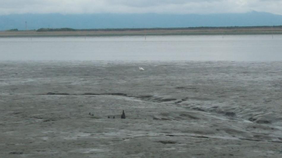 有明海 干満差 シラサギ
