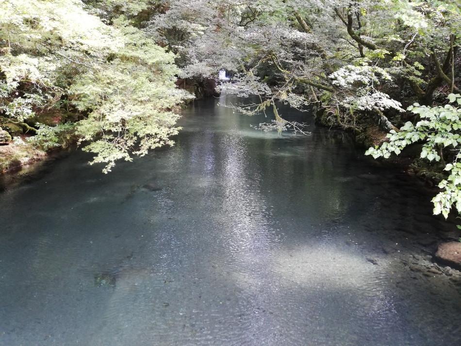 観光には水がきれいな菊池渓谷