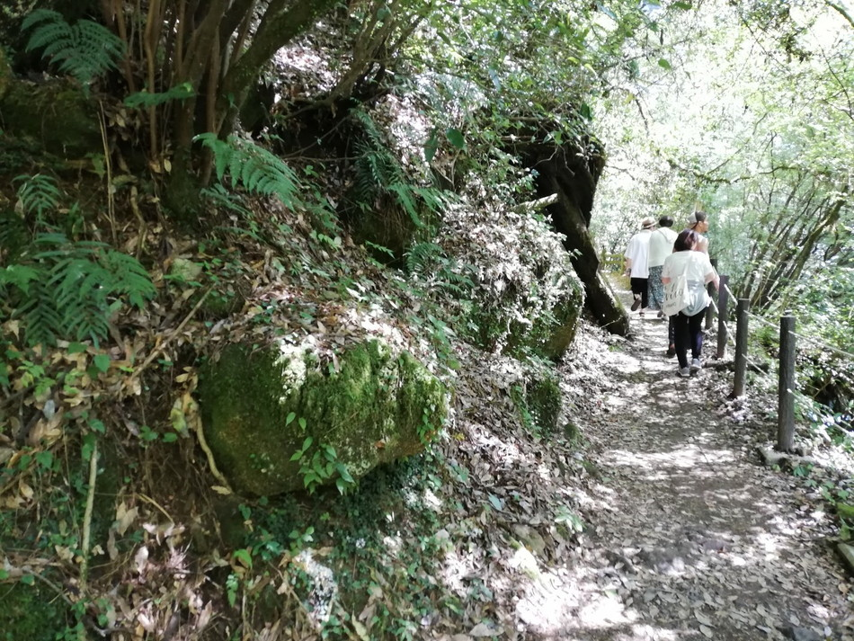 菊池渓谷の山道