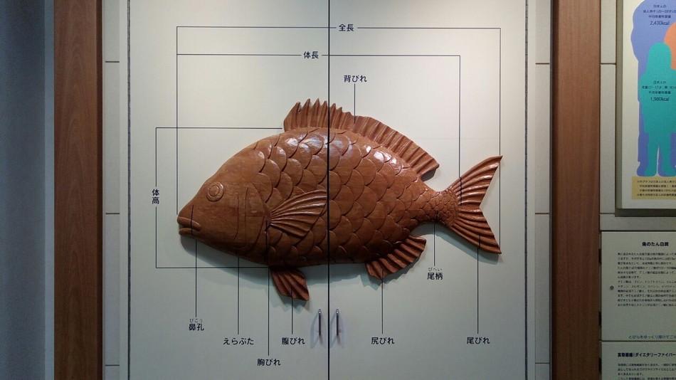 魚部位名称おすすめ写真